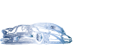 Saticoy Auto Body & Painting
